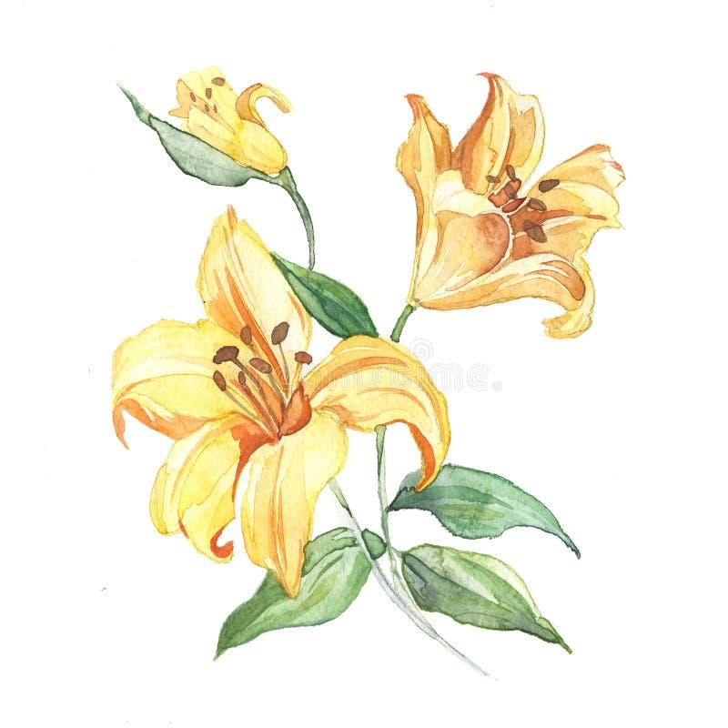 Våren blommar liljamålningvattenfärgen vektor illustrationer