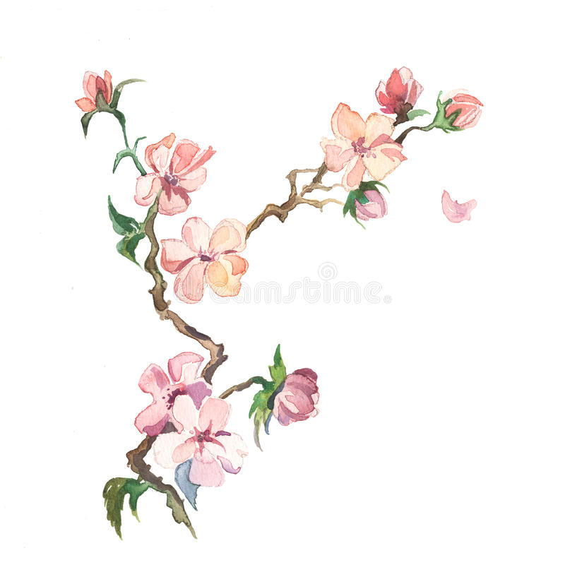 Våren blommar målningvattenfärgen royaltyfri illustrationer