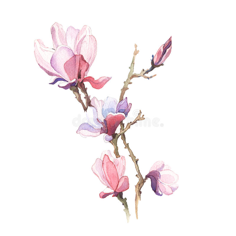 Våren blommar magnoliamålningvattenfärgen stock illustrationer
