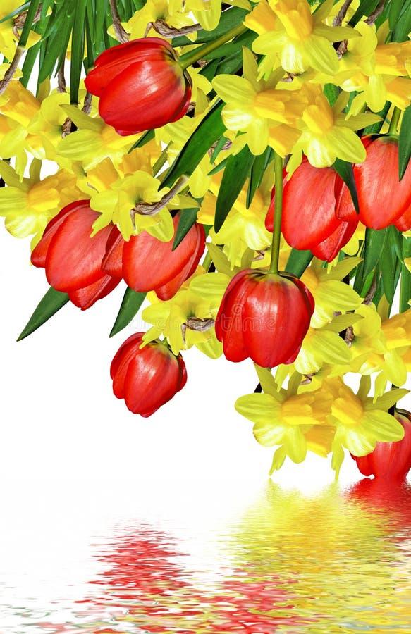 Våren blommar narcissuses arkivbild