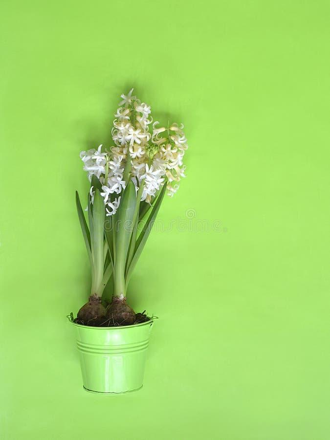 Våren blommar på den gröna svart tavla royaltyfri foto
