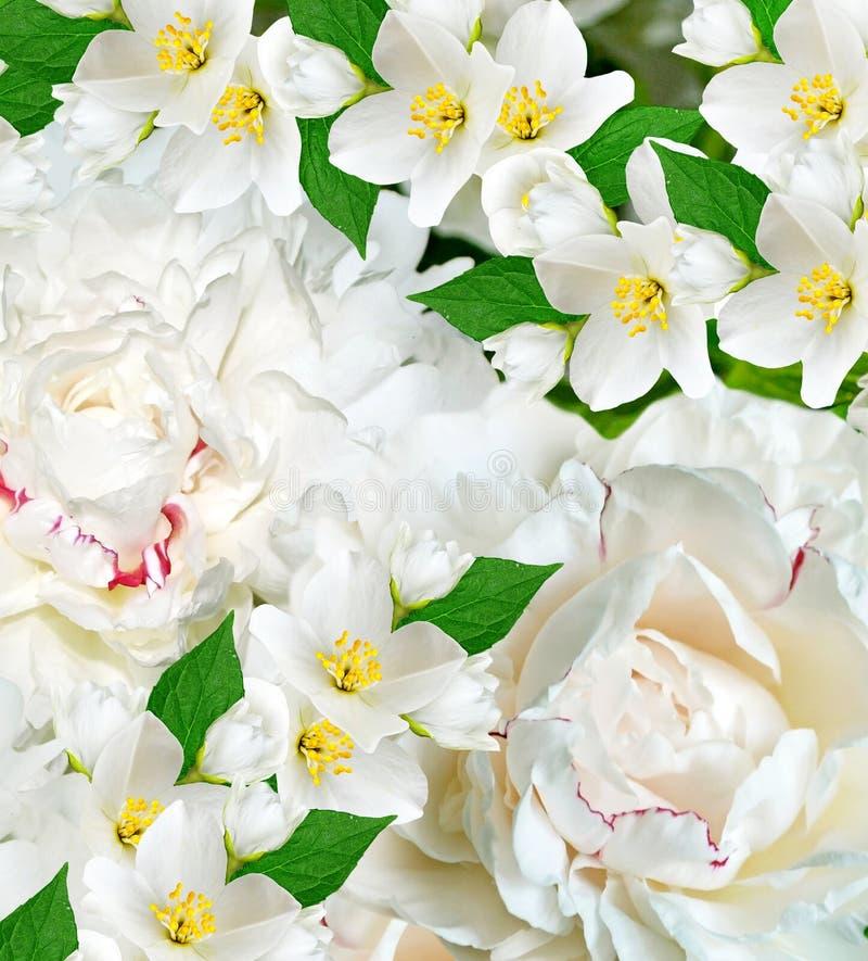 Våren blommar pioner och jasmin fotografering för bildbyråer