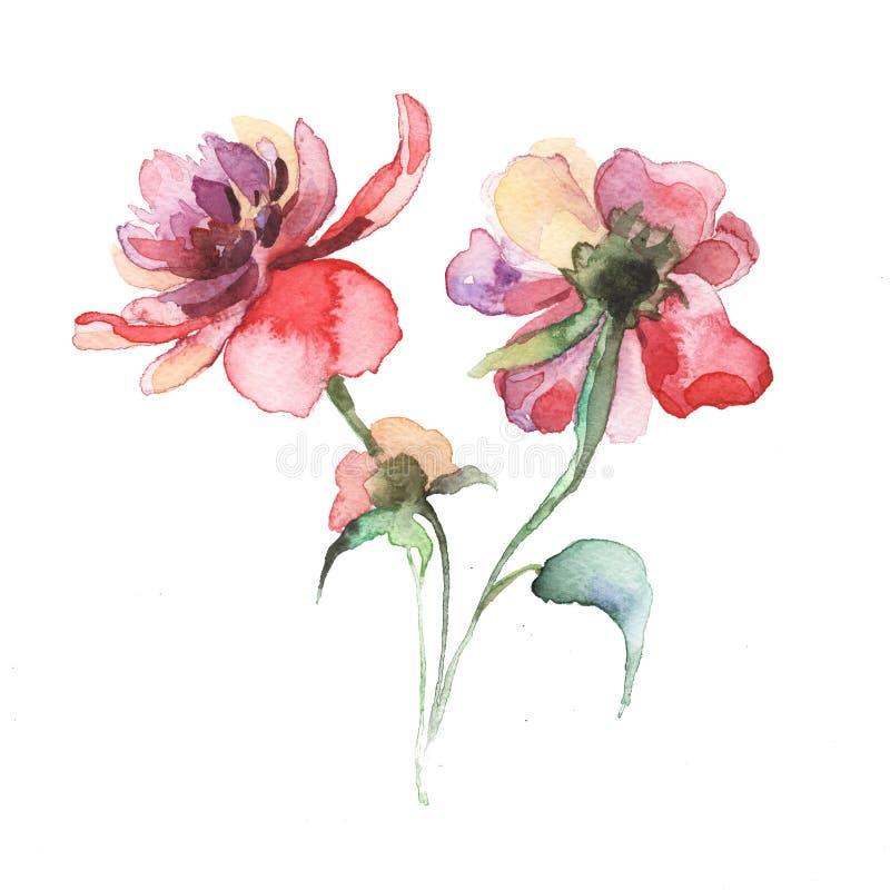Våren blommar pionmålningvattenfärgen royaltyfri illustrationer