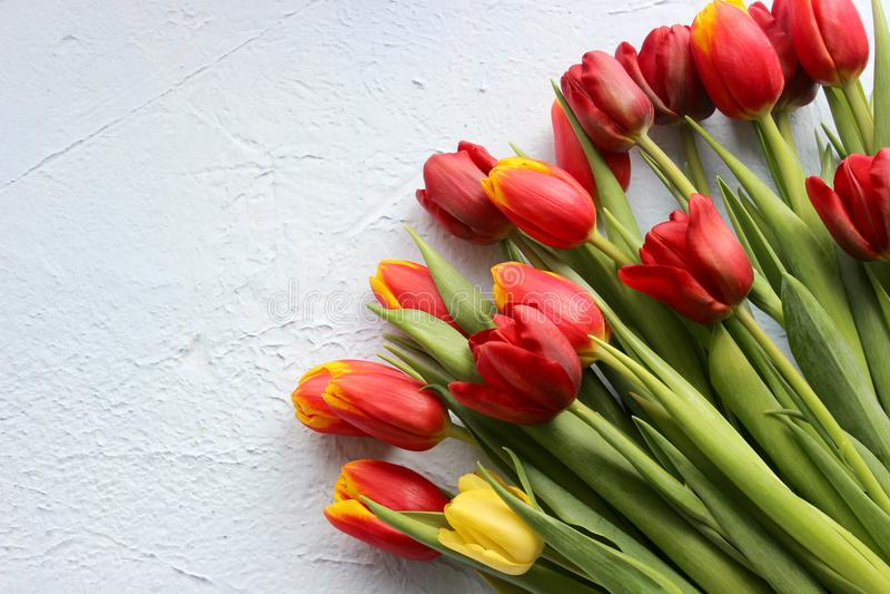 Våren blommar tulpan på en blå bakgrund Marschera 8, den internationella dagen för kvinna` s, dagen för moder` s eller födelsedag arkivbild