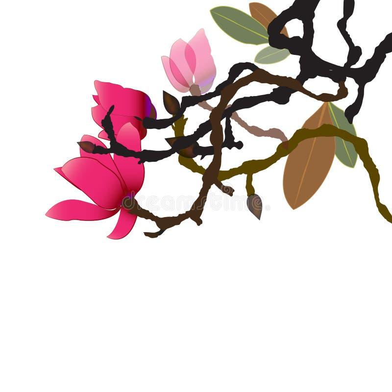 Våren har fjädrat, magnoliaträdglittren med dess vibrerande sammetslena blommor royaltyfri illustrationer