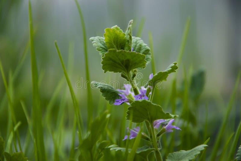 Våren har kommit, växter frodas arkivbild