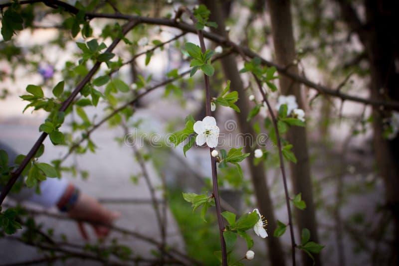 Våren vaknar upp arkivfoto