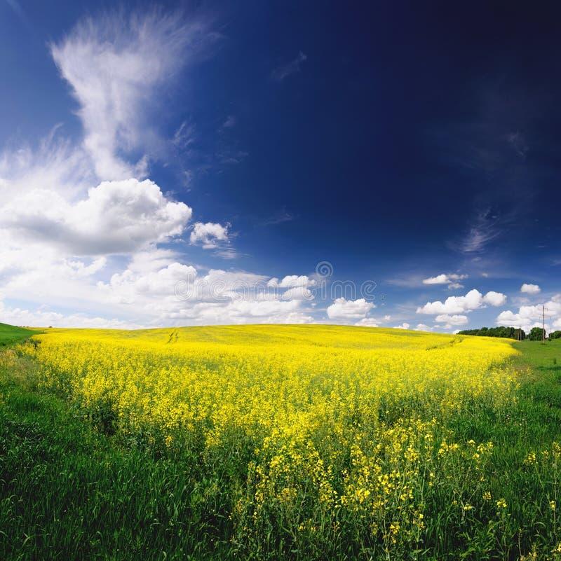 Vårfält i Ukraina det härliga landskapet royaltyfri foto