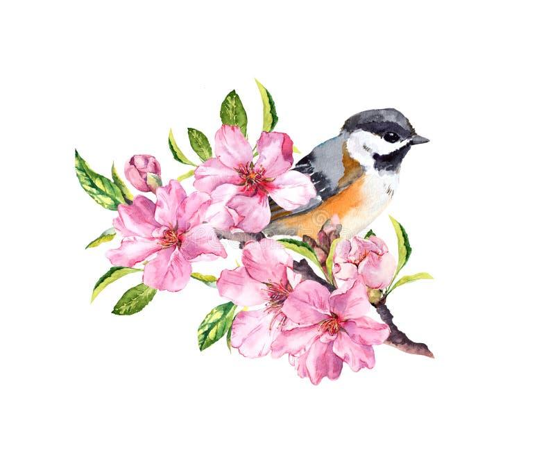 Vårfågel på att blomma filialen med rosa blommor av körsbäret, sakura, äpple, mandelblommor Vattenfärg vektor illustrationer
