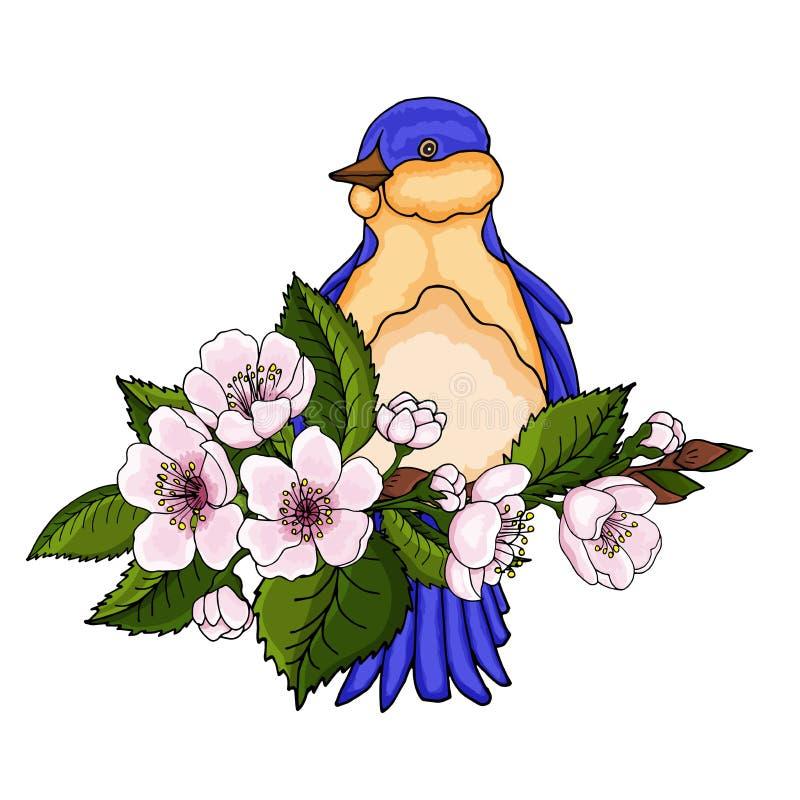 Vårfågeln sitter på filialer för den körsbärsröda blomningen som isoleras på vit bakgrund royaltyfri illustrationer