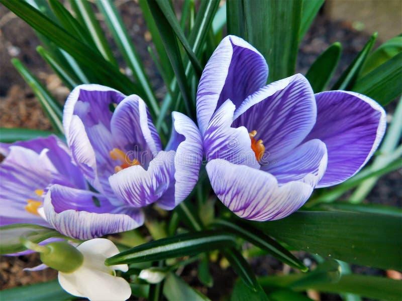 Vårfeber i februari arkivbild