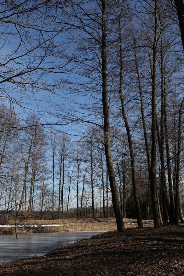 Vårferier Djupfryst sjöis, blå himmel, träd arkivfoto