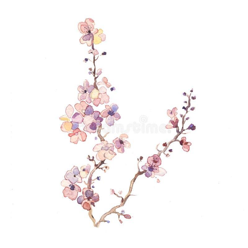 Vårfilialen upplöser vattenfärgen för blommavattenfärgmålning royaltyfri illustrationer