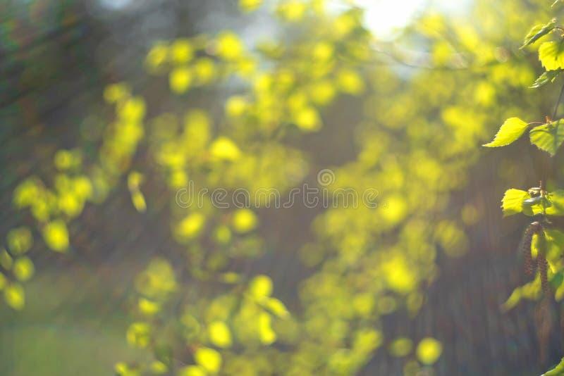 VårgräsplanlRainbow sun&en x27; s-strålar på en suddig bakgrund av ny grön lövverk V royaltyfri fotografi