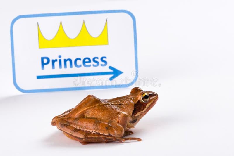 Vårgroda (Ranadalmatina) på itÂs väg att kyssa prinsessan arkivfoto