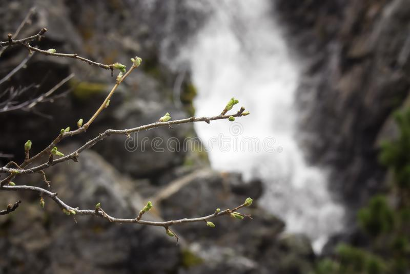 Vårknoppar på trädgårdliten viknedgångar royaltyfri bild