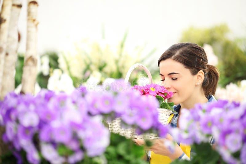 Vårkvinna i lukt för blommaträdgård primulorna i korg royaltyfri fotografi
