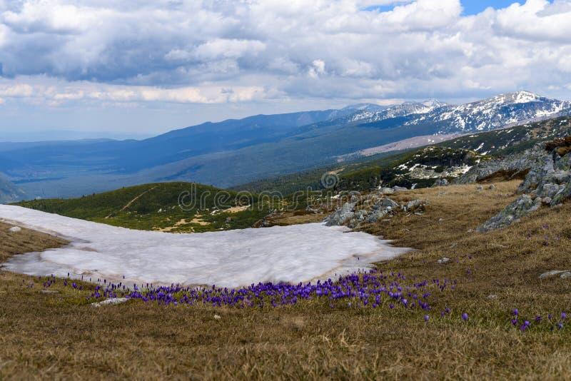 Vårlandskap av den Rila nationalparken, Bulgarien royaltyfri bild