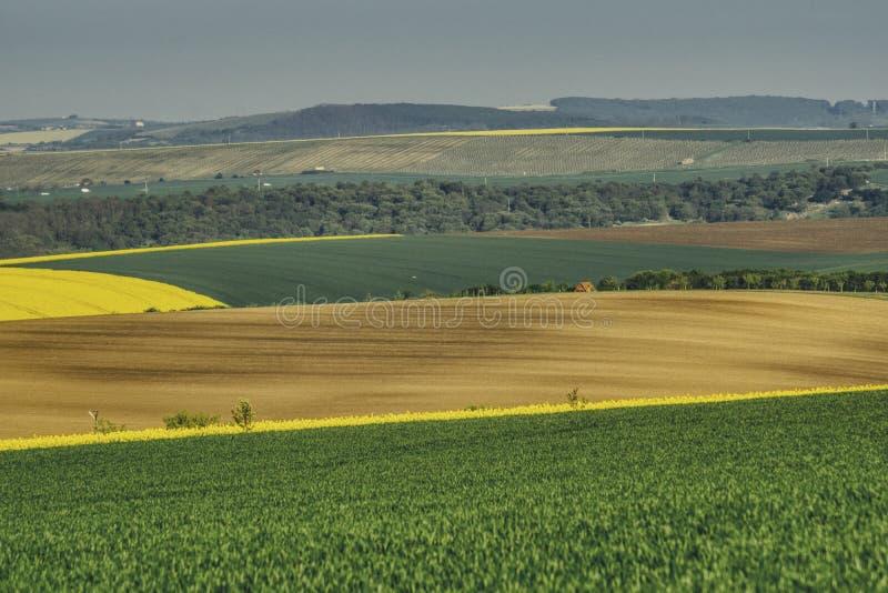 Vårlandskap av sydliga Moravia med en blomstra raps royaltyfria foton