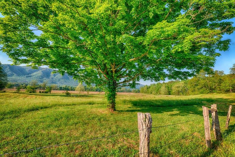 Vårlandskap i den Cades lilla viken Great Smoky Mountains royaltyfri fotografi