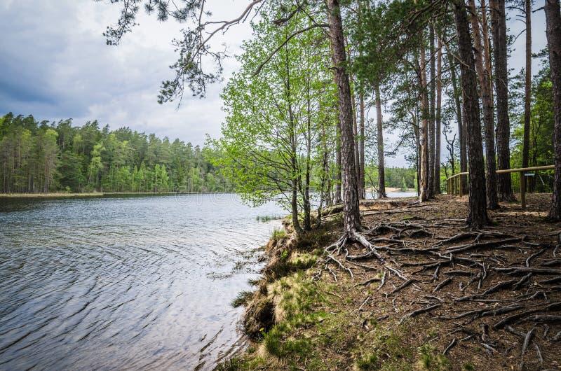 Vårlandskap i skogsjön arkivbild
