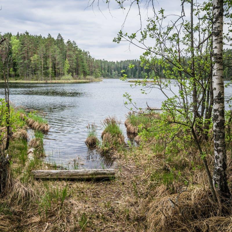 Vårlandskap i skogsjön fotografering för bildbyråer