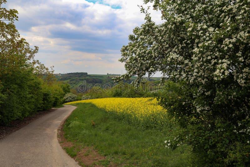 Vårlandskap med blomningträd och fält royaltyfria foton