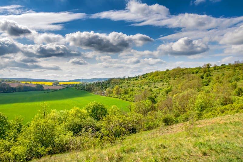 Vårlandskap med det gröna fältet, buskar och molnig himmel arkivfoto