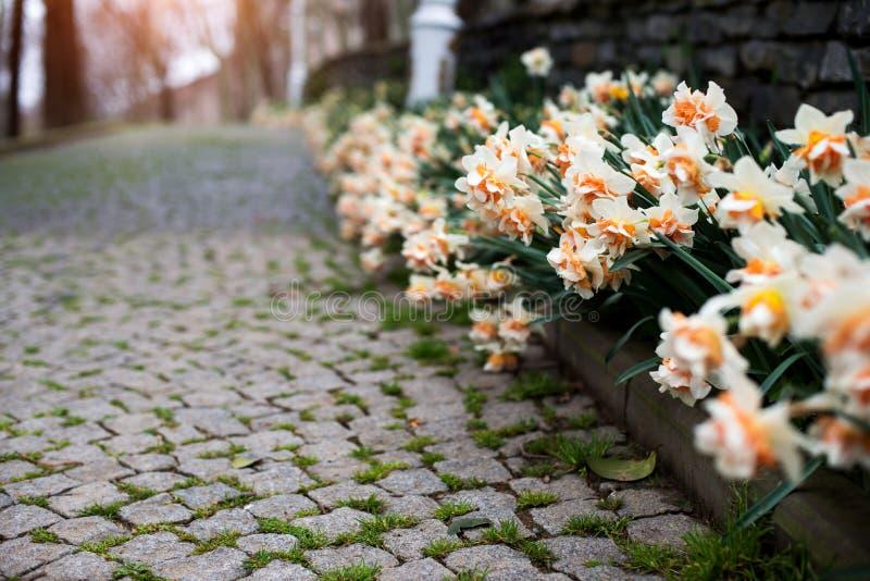 Vårlandskap med färgrika blommor royaltyfria foton