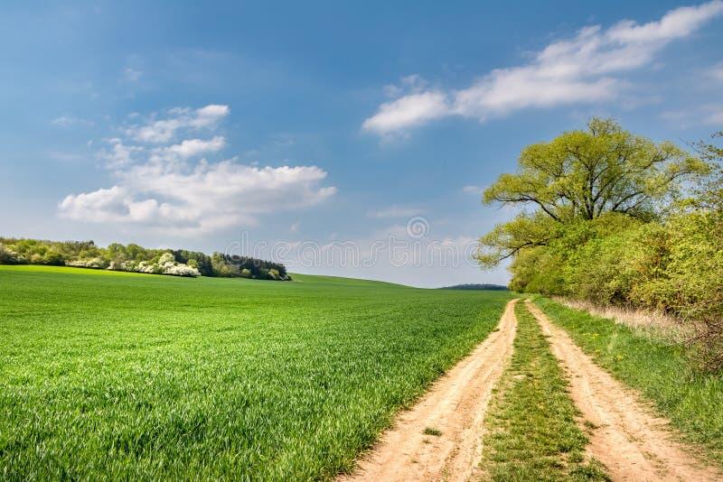 Vårlandskap med grusvägen och det gröna fältet royaltyfri bild