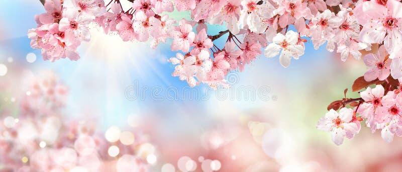 Vårlandskap med rosa körsbärsröda blomningar royaltyfri fotografi