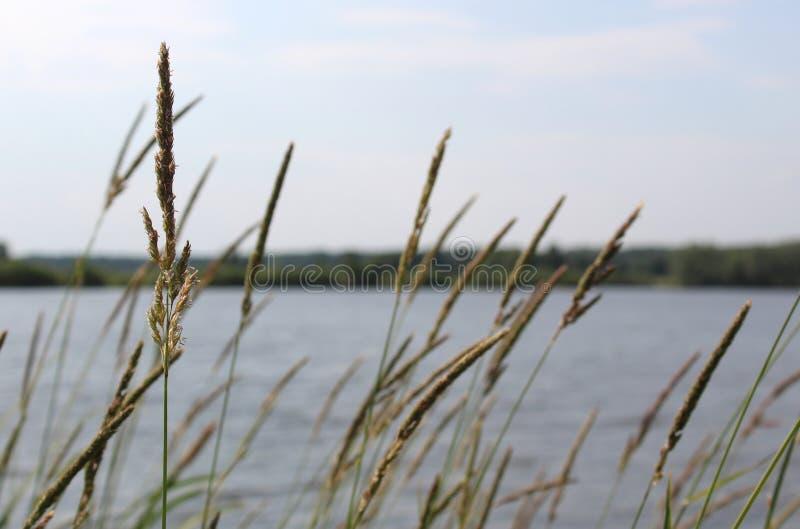 Vårlandskap med sikt av sjön med grönt gräs och filialer Solig dag i natur med blå himmel och vit moln och skog royaltyfri foto