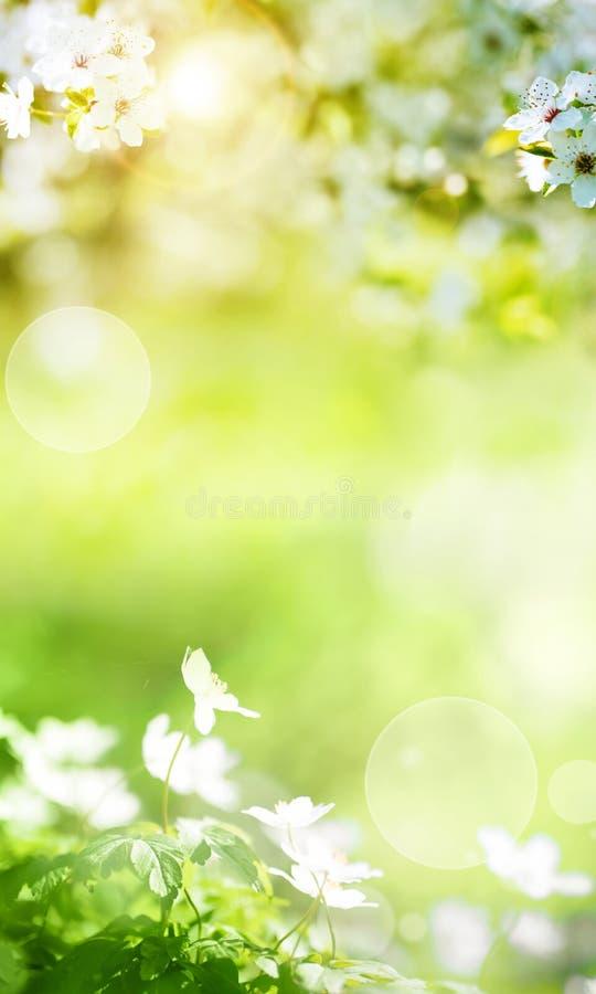 Vårlandskap med smal blommor arkivbilder