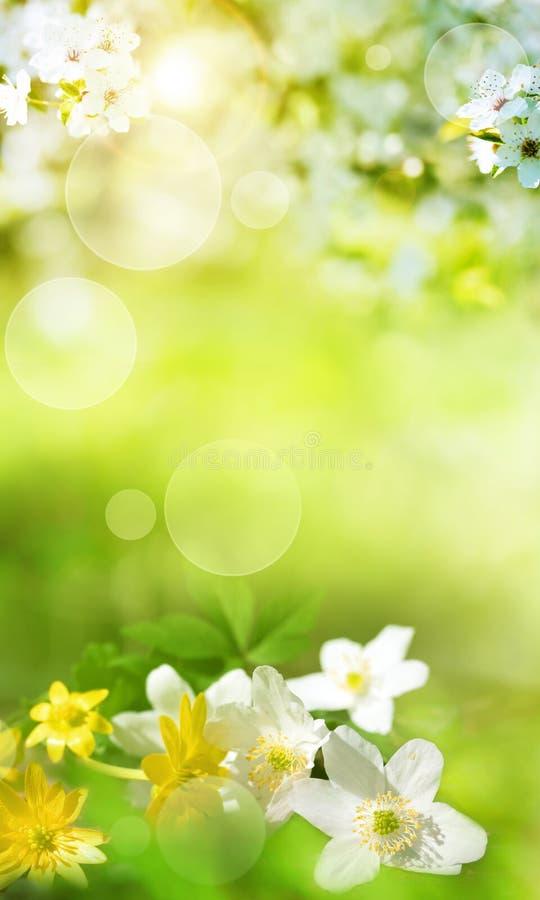 Vårlandskap med smal blommor royaltyfri bild