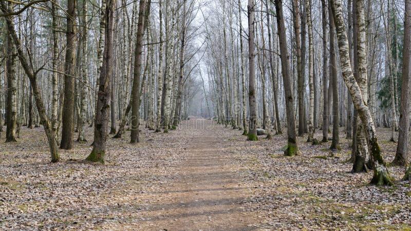 Vårlandskap med vandringsledet i trän arkivfoton