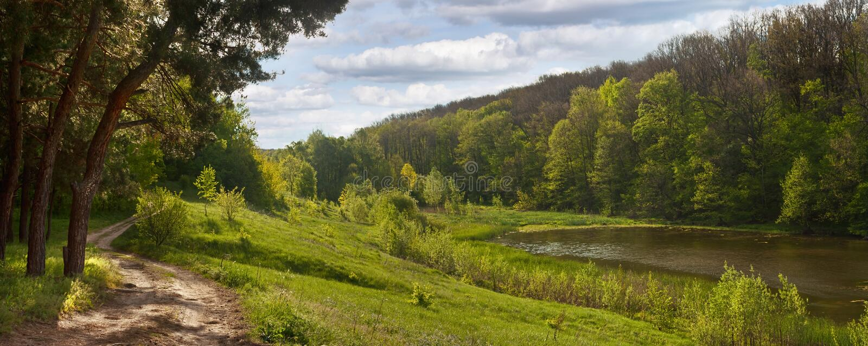 Vårlandskap - väg nära pinjeskogen, bredvid ett damm royaltyfri fotografi