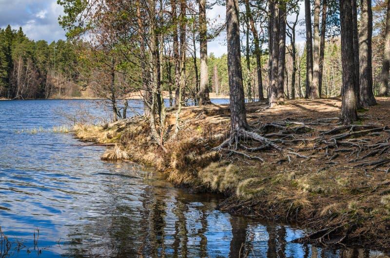 Vårlandskap, wood sjö royaltyfri bild