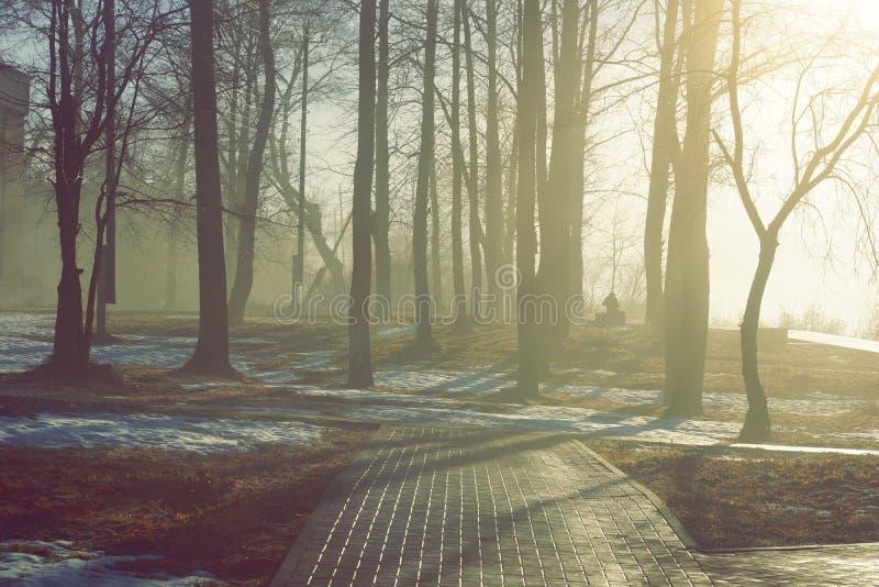 Vårlandskapet parkerar i dimman och träden som smälter snö royaltyfria bilder