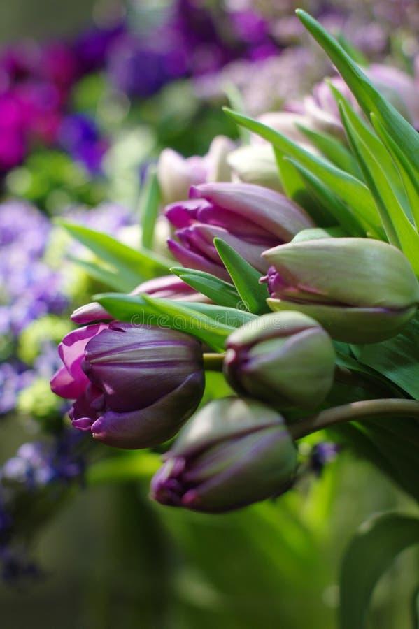 Vårlilan blommar tulpan arkivbilder