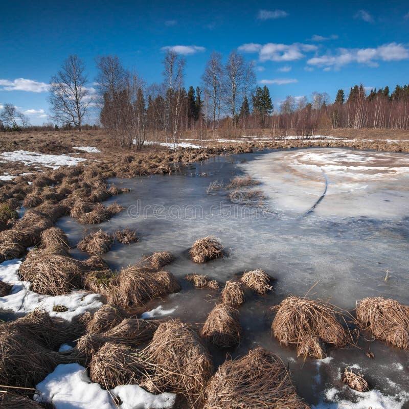 Vårmelt isen på sjön royaltyfri bild