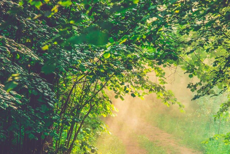 Vårnatur i dimma arkivbild