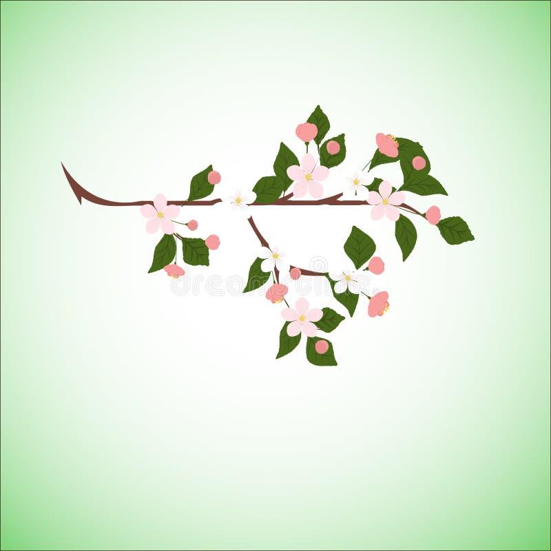 Vårnaturbakgrund med en rosa blommande sakura royaltyfri illustrationer
