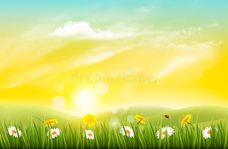 Vårnaturbakgrund med gräs och blommor vektor illustrationer