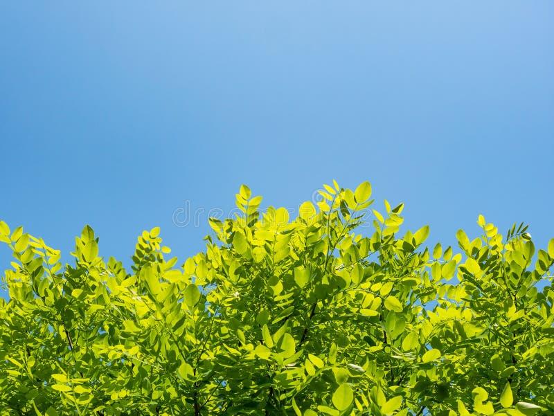 Vårnaturbakgrund med gröna trädsidor på bakgrund för blå himmel royaltyfria foton
