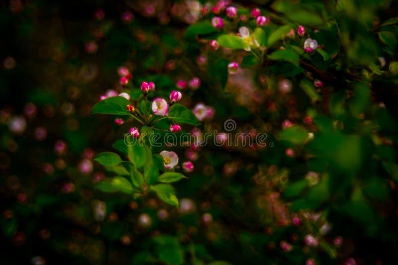 Vårnaturflora royaltyfria foton