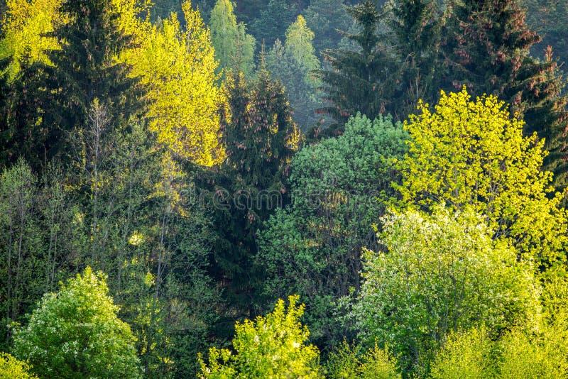 Vårnaturskog royaltyfri bild