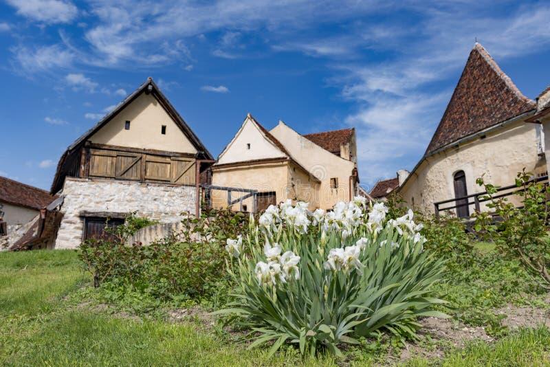 Vårsikt av den inre countryarden för Rasnov citadell, i det Brasov länet (Rumänien), med att blomma vita iriers i förgrunden och arkivbild