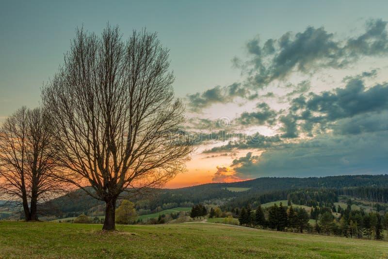 vårsikt av träd på äng royaltyfria bilder