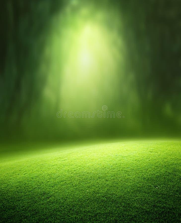 Vårskogbakgrund
