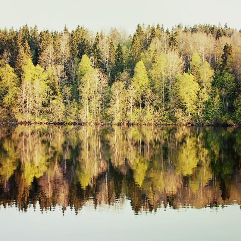 Vårskogen reflekteras i floden arkivfoto